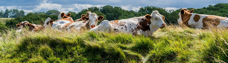 l'association lait de pâturage