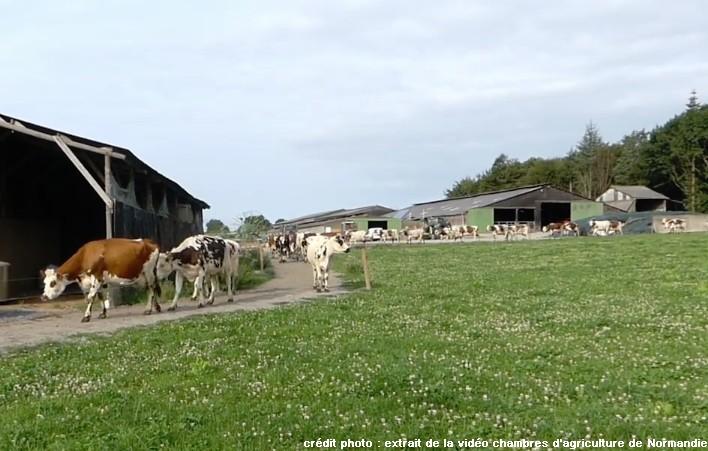Des chemins de qualité pour les vaches laitières