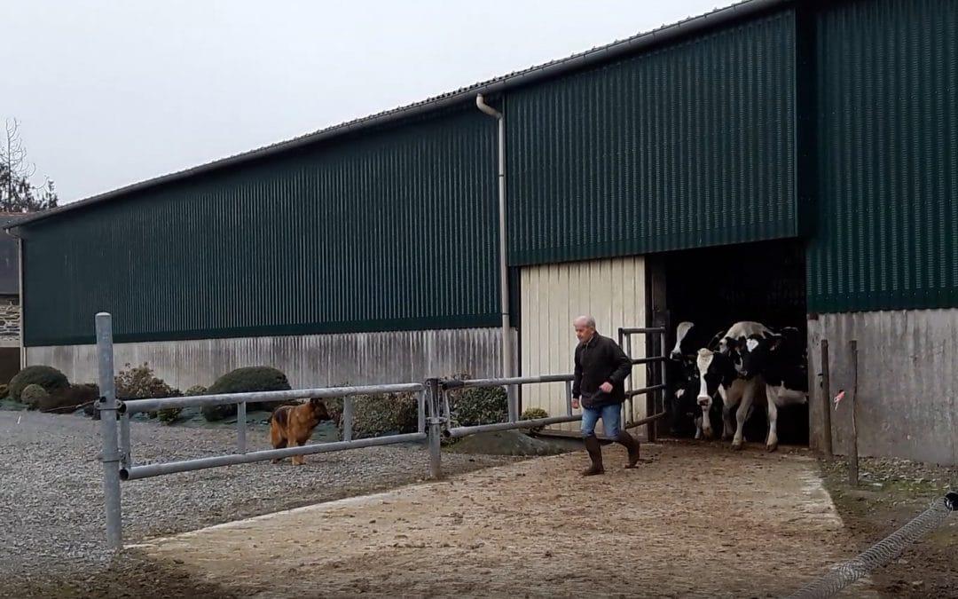 La danse des vaches en vidéo 21 février 2019 au GAEC ROBERT-MALLET
